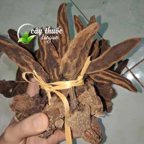 Tác dụng của nấm ngọc cẩu và mua nấm ngọc cẩu ở đâu chất lượng